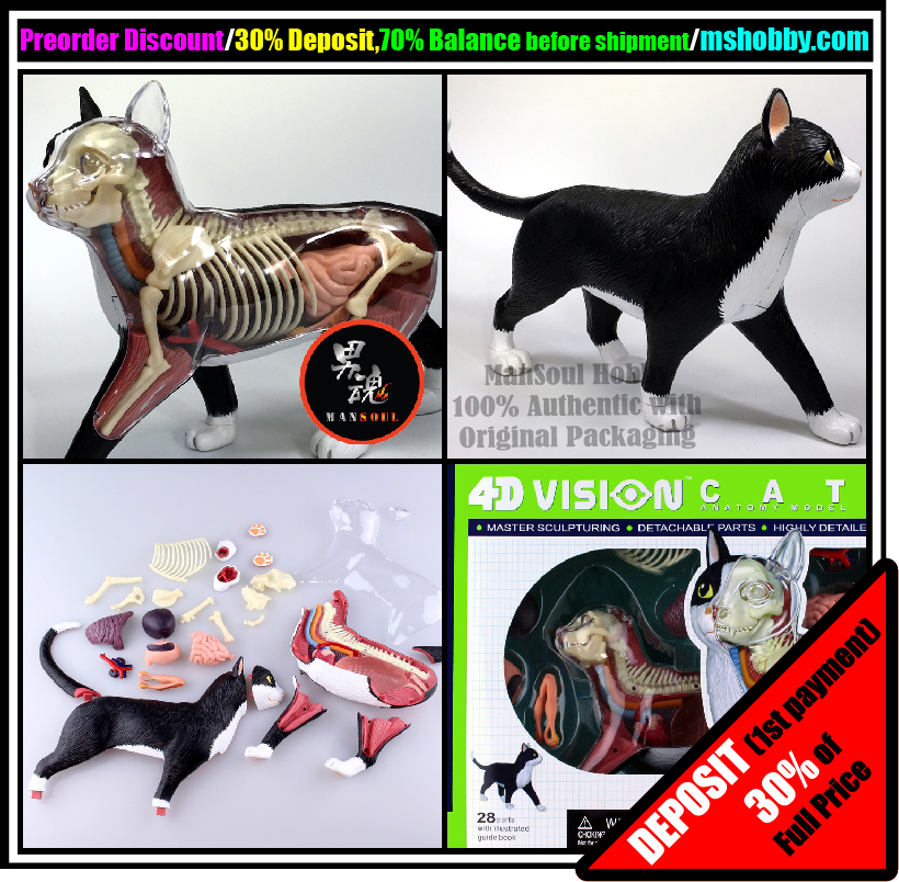 4d Vision Animal Dissection No 29 Cat Anatomy Skynet