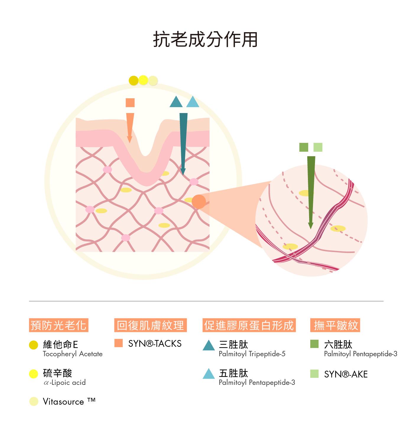 4類抗老緊緻成分 打造肌膚緊實彈力