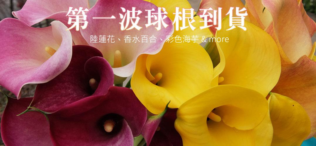 陸蓮花、香水百合、彩色海芋&more | iGarden花寶愛花園