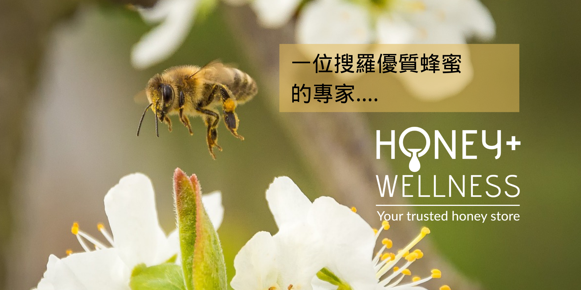 Honey And Wellness is an expert in sourcing premium honey