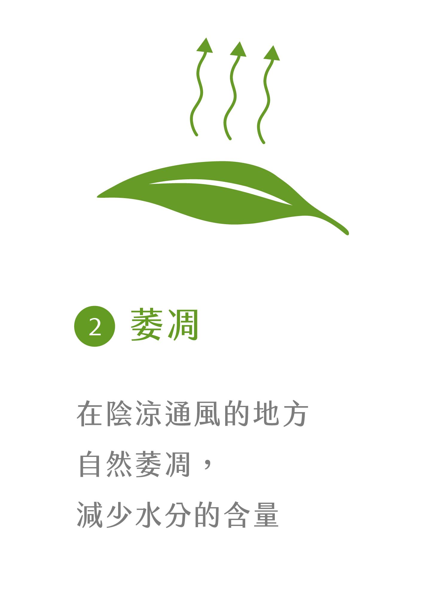 晁鎮茶苑古樹茶雨林製作流程萎凋