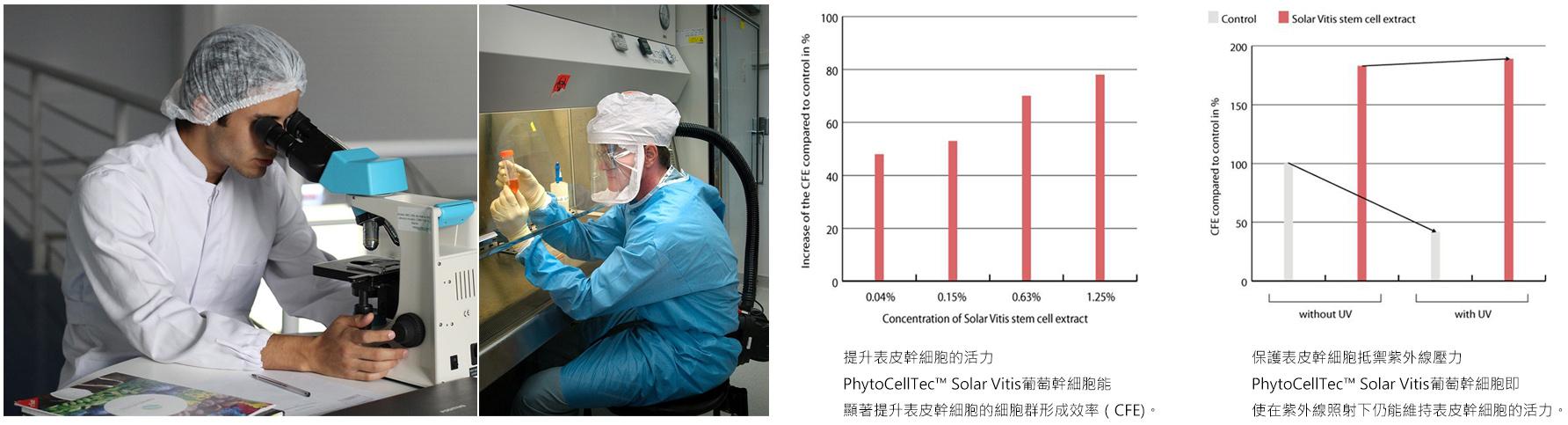 PhytoCellTec™ Solar Vitis葡萄幹細胞,能顯著提升表皮幹細胞的細胞群形成效率,即使在紫外線照射下仍能維持表皮幹細胞的活力