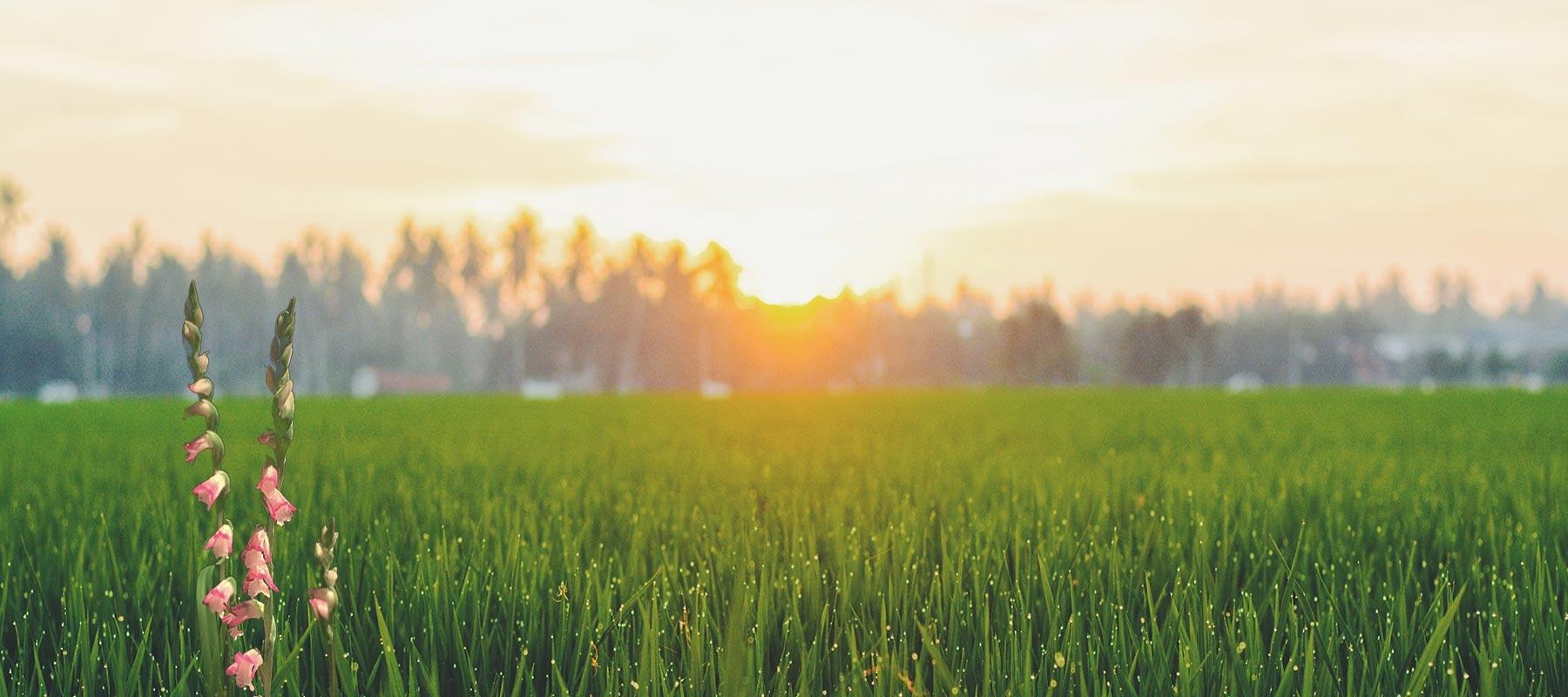 翠綠綬草守護健康肌膚