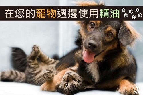 寵物可以使用精油嗎