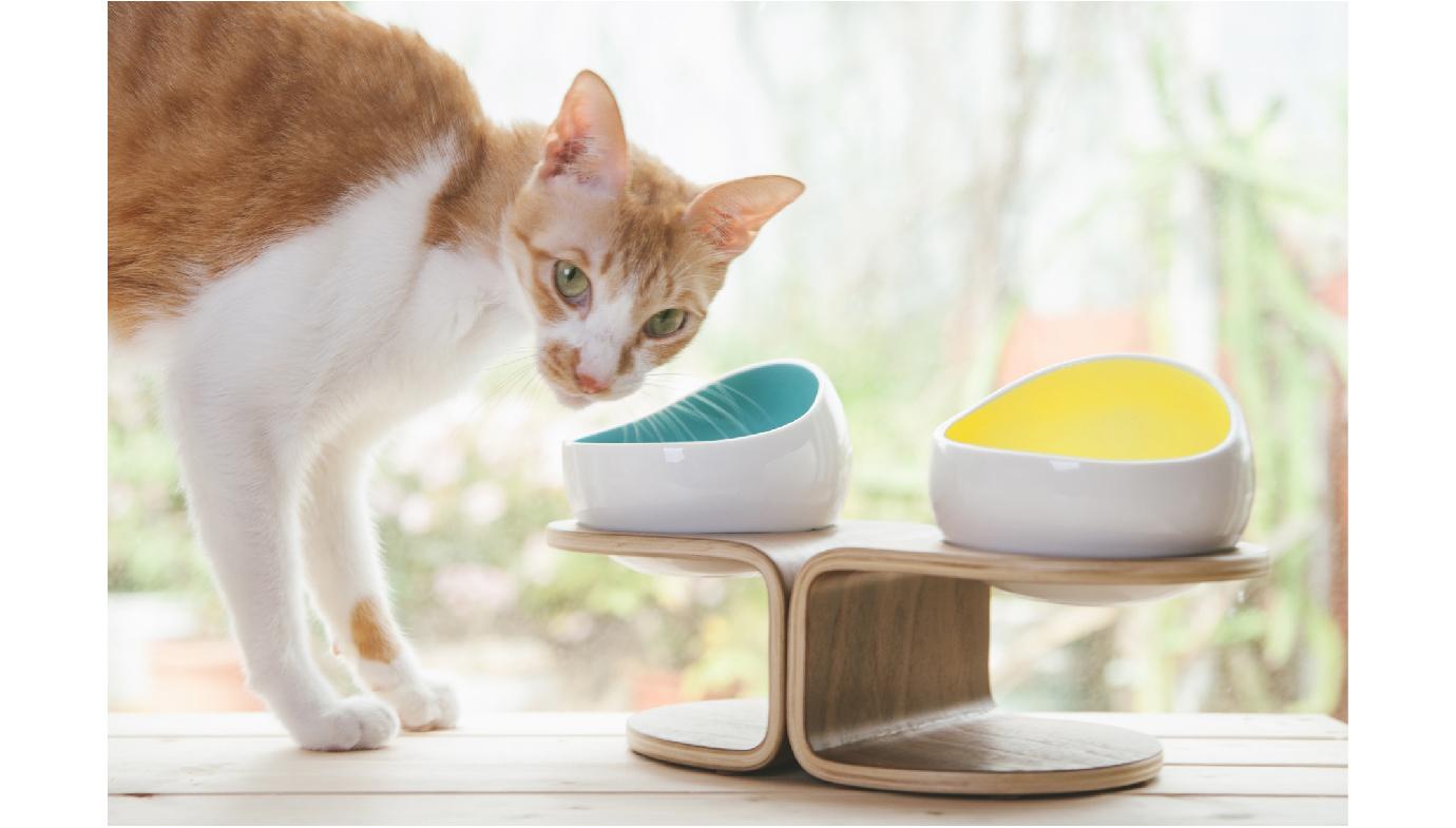 寵物碗,貓碗,時空膠囊碗,太空碗