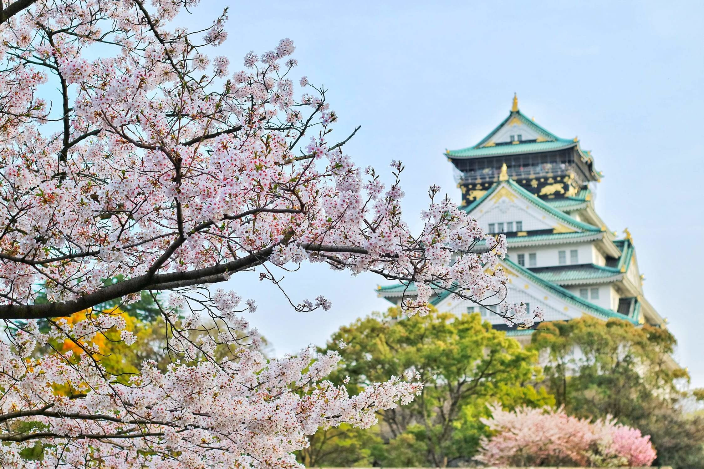 MSA玻璃雕刻櫻花祭