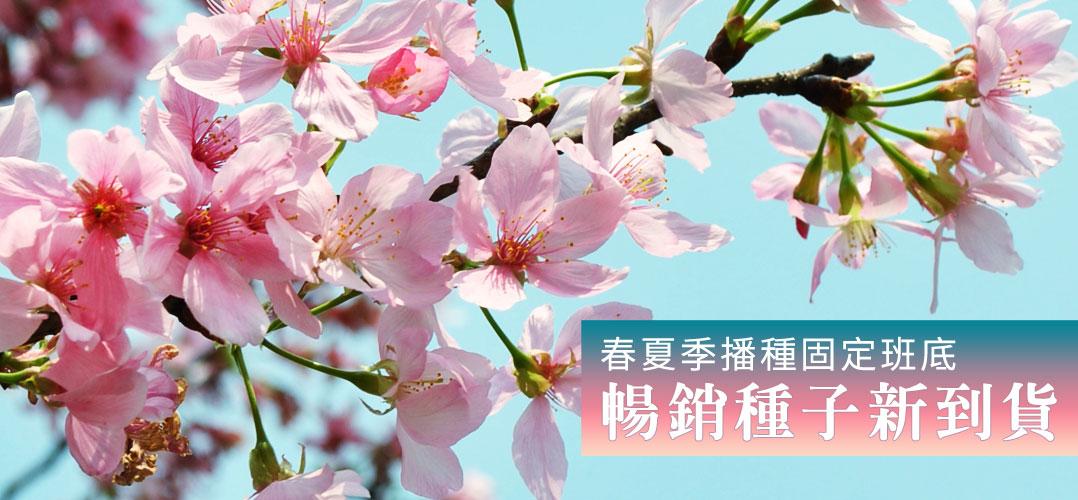 春夏季播種固定班底、暢銷種子新到貨 | iGarden花寶愛花園