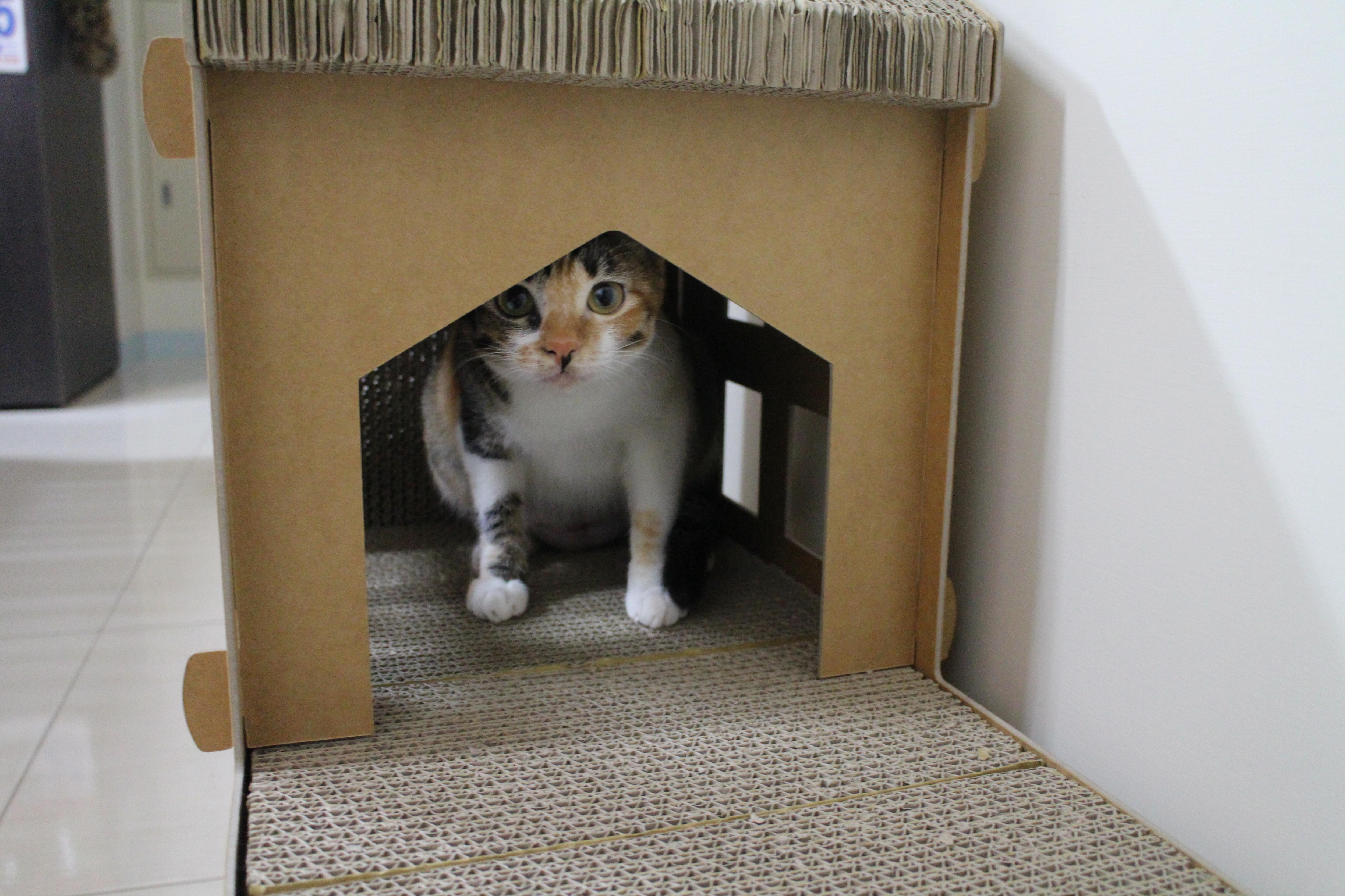 貓抓屋推薦