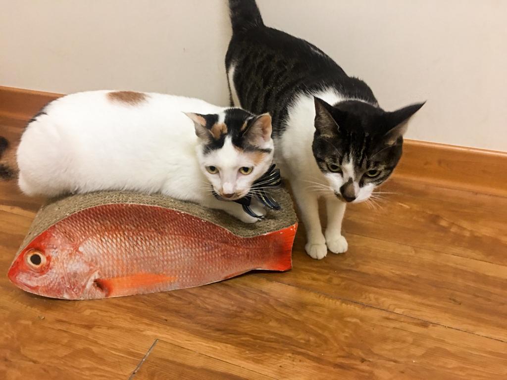 貓抓板推薦