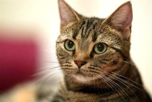 貓抓板去哪買