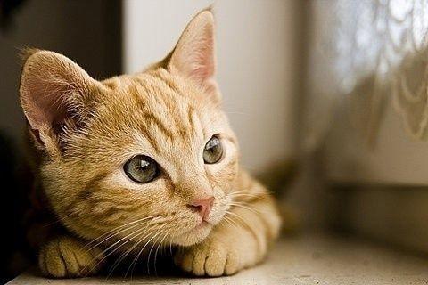 貓抓板用途