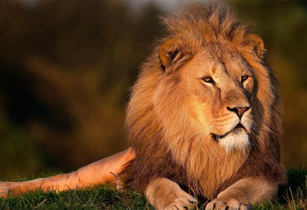 沐樂旅遊,沐樂,mullertravel,肯亞,非洲,獅子