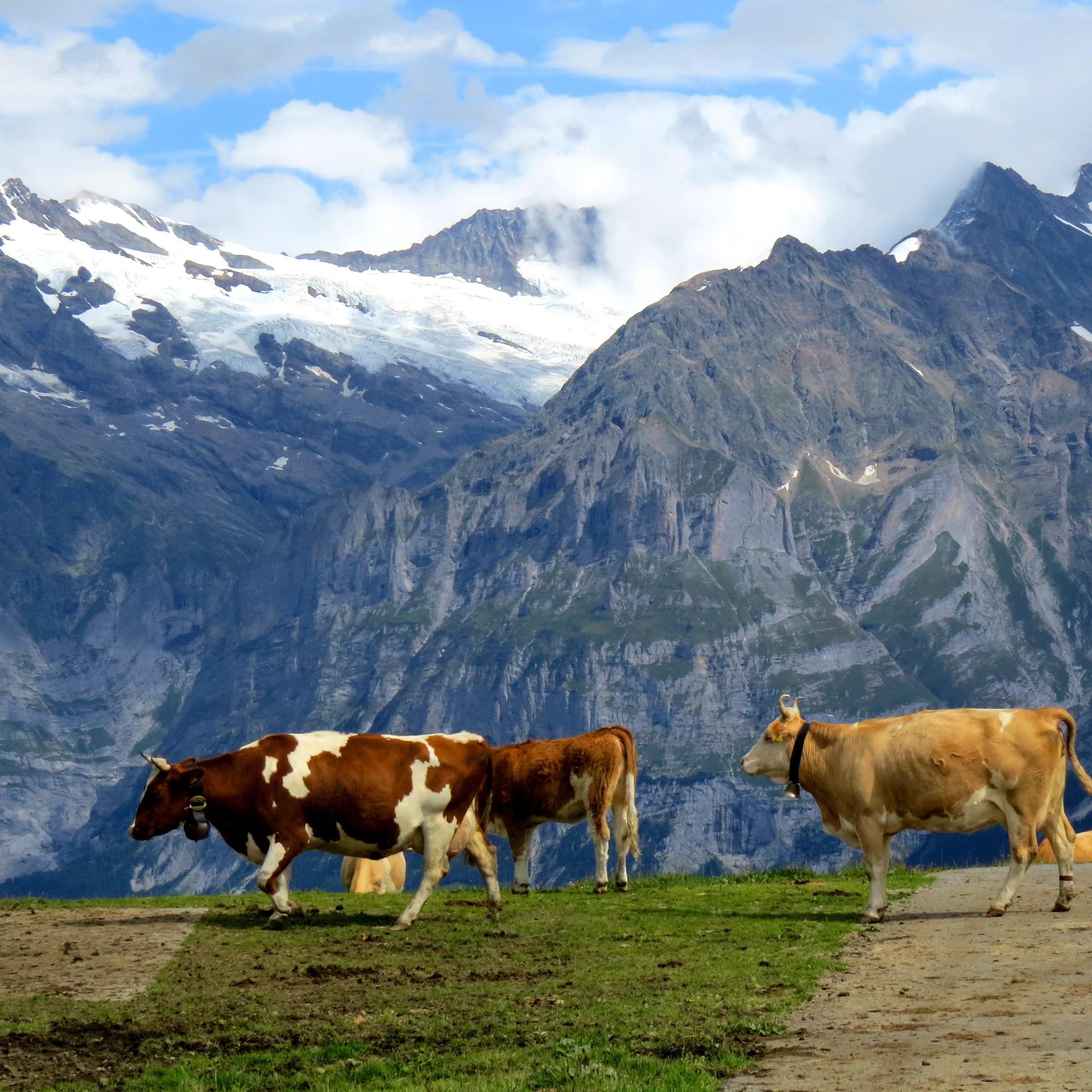 瑞士景觀火車14天
