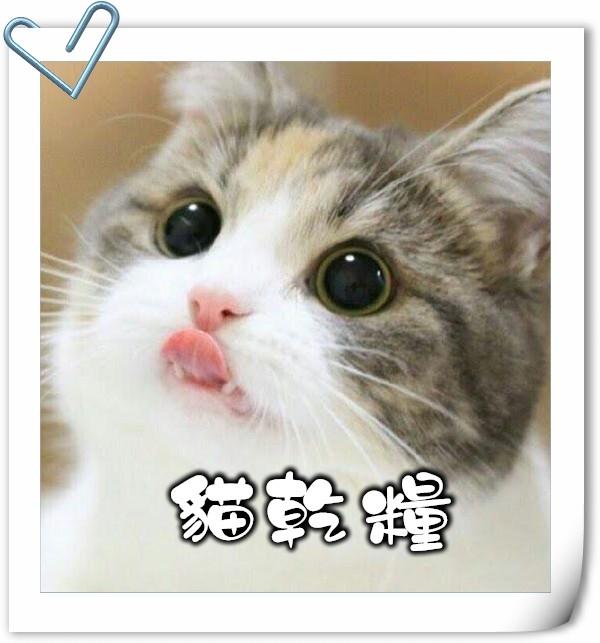 貓,貓咪,寵物用品,貓砂,貓糧,貓玩具,貓清潔,貓罐頭,貓零食,貓濕糧,乾糧,天然貓糧,脫水貓糧,貓小食,貓玩具,feline,canine,cat,pet,online pet,pet shop,cat food,cat dried food