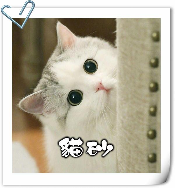 貓,貓咪,寵物,貓砂,貓糧,貓玩具,貓清潔,貓罐頭,貓零食,貓濕糧,乾糧,天然貓糧,脫水貓糧,貓小食,貓玩具,feline,canine,cat,pet,online pet,pet shop,cat food,cat litter,豆腐砂,粟米砂