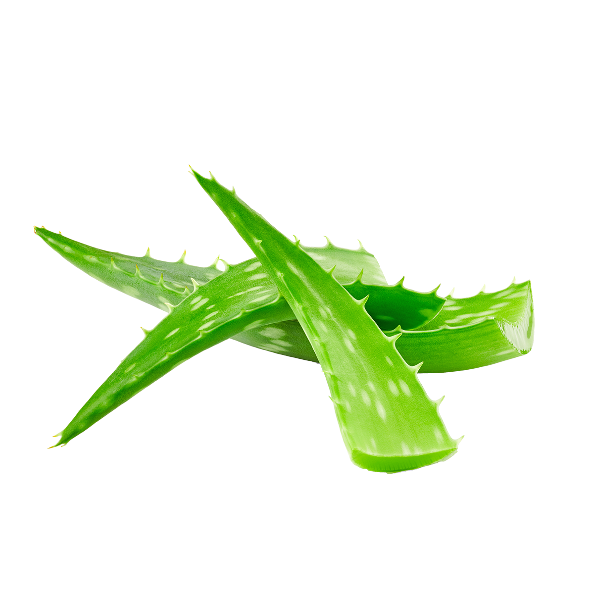 Aloe Vera Leaf Extract Powder/Juice-RARE SkinFuel