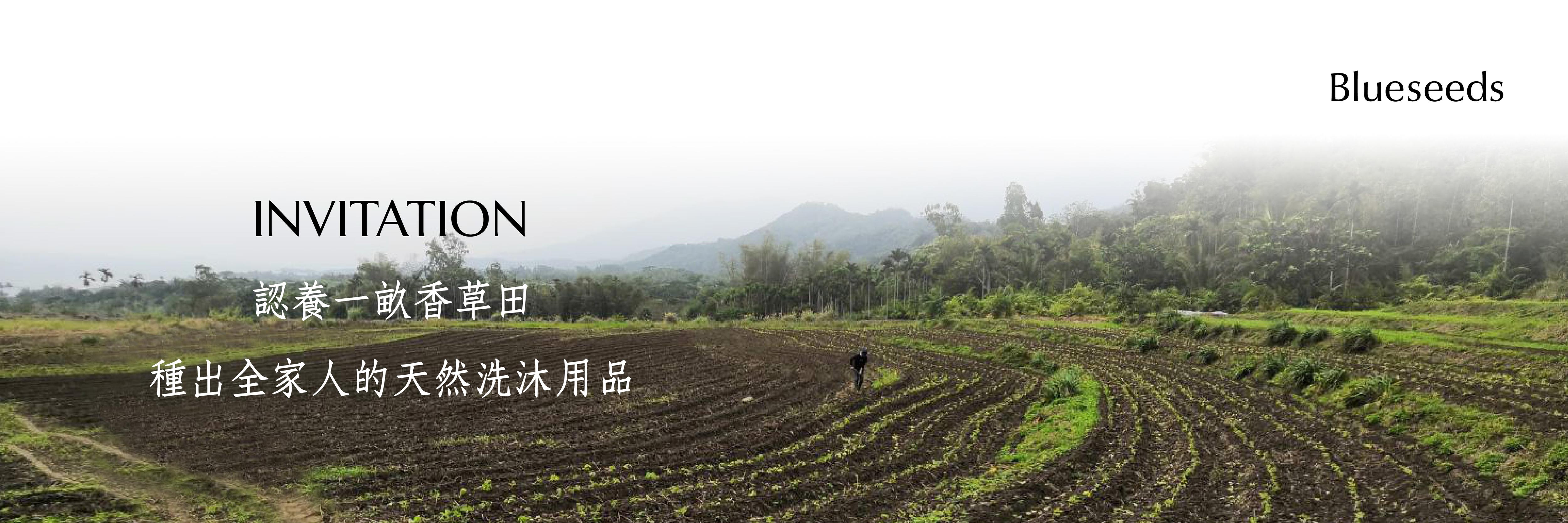 認養一畝香草田