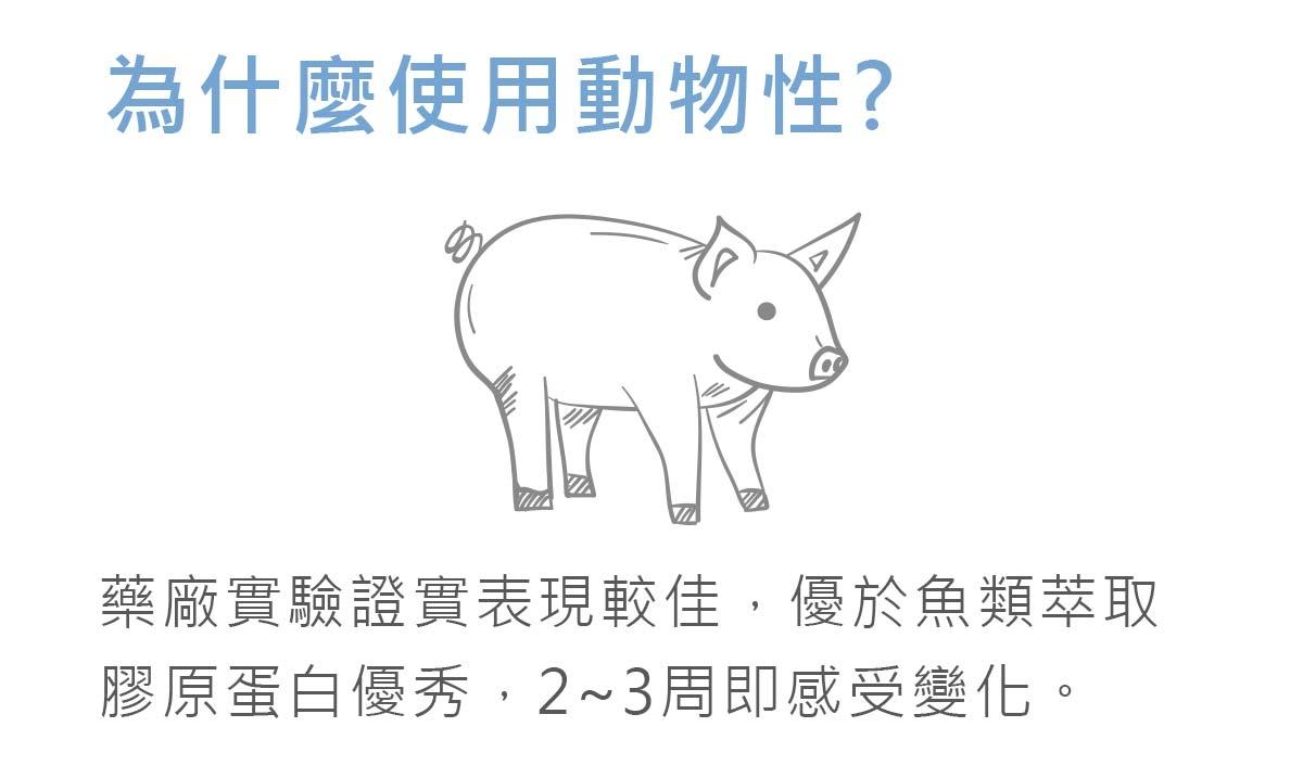 因豬的膠原蛋白優於魚類所以我們萃取豬的膠原蛋白-簡單入喉膠原蛋白防彈咖啡