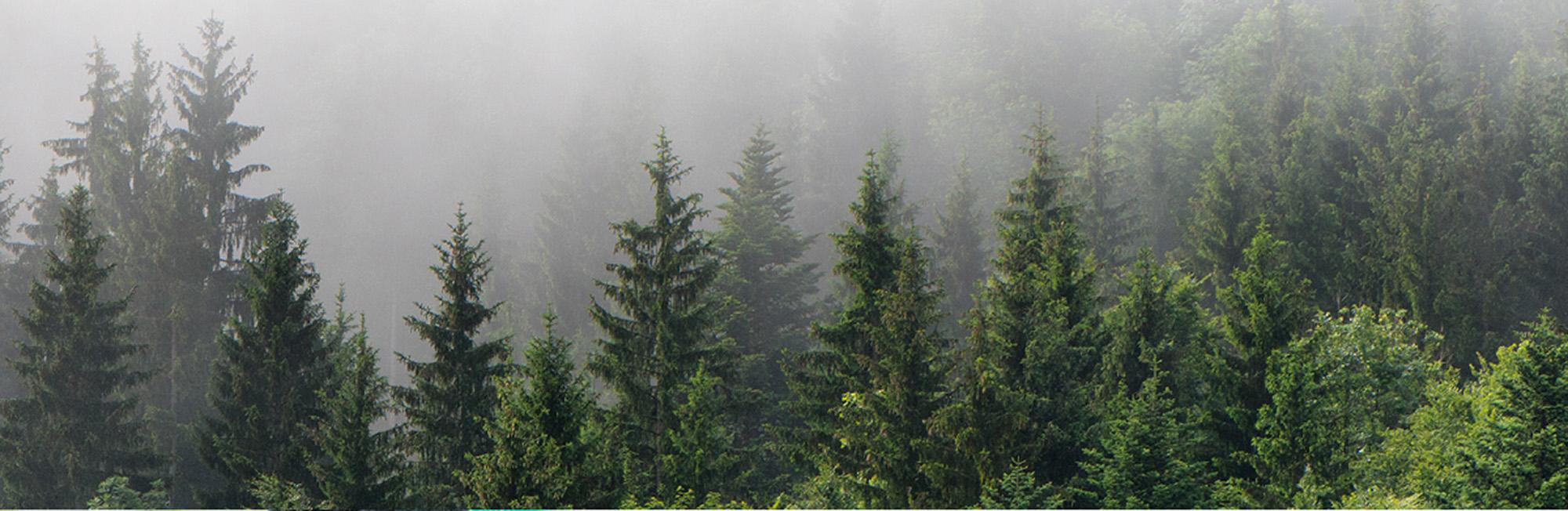 世界已消失了1.29億公頃的森林