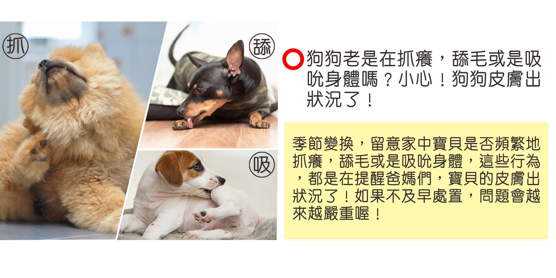 content-dog360-01