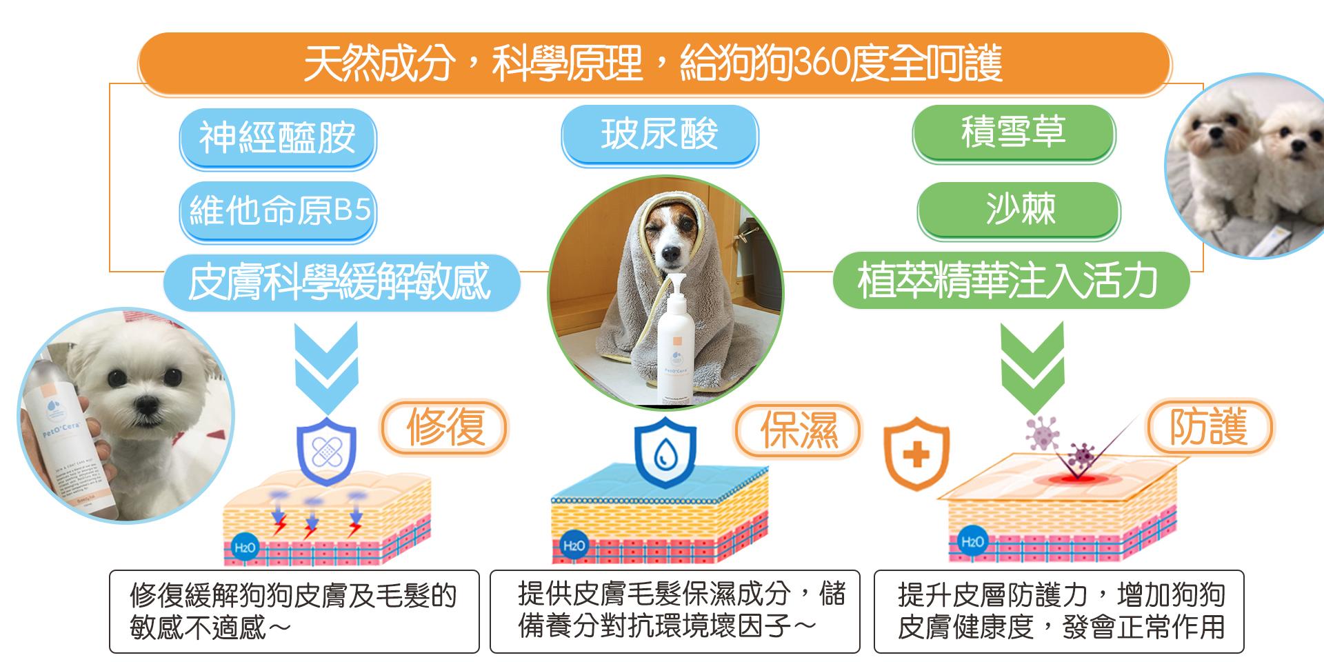 content-dog360-03