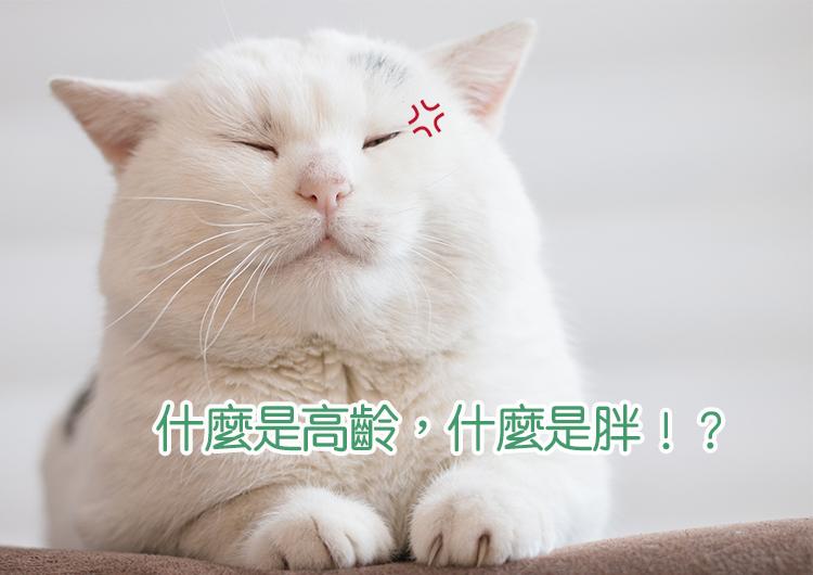 Blog-Cat02