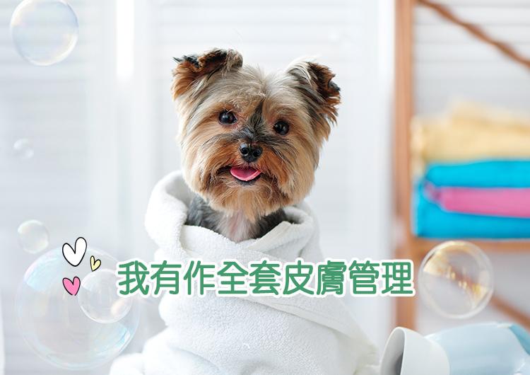 Blog-dogskincare