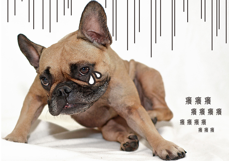 blog-dog01