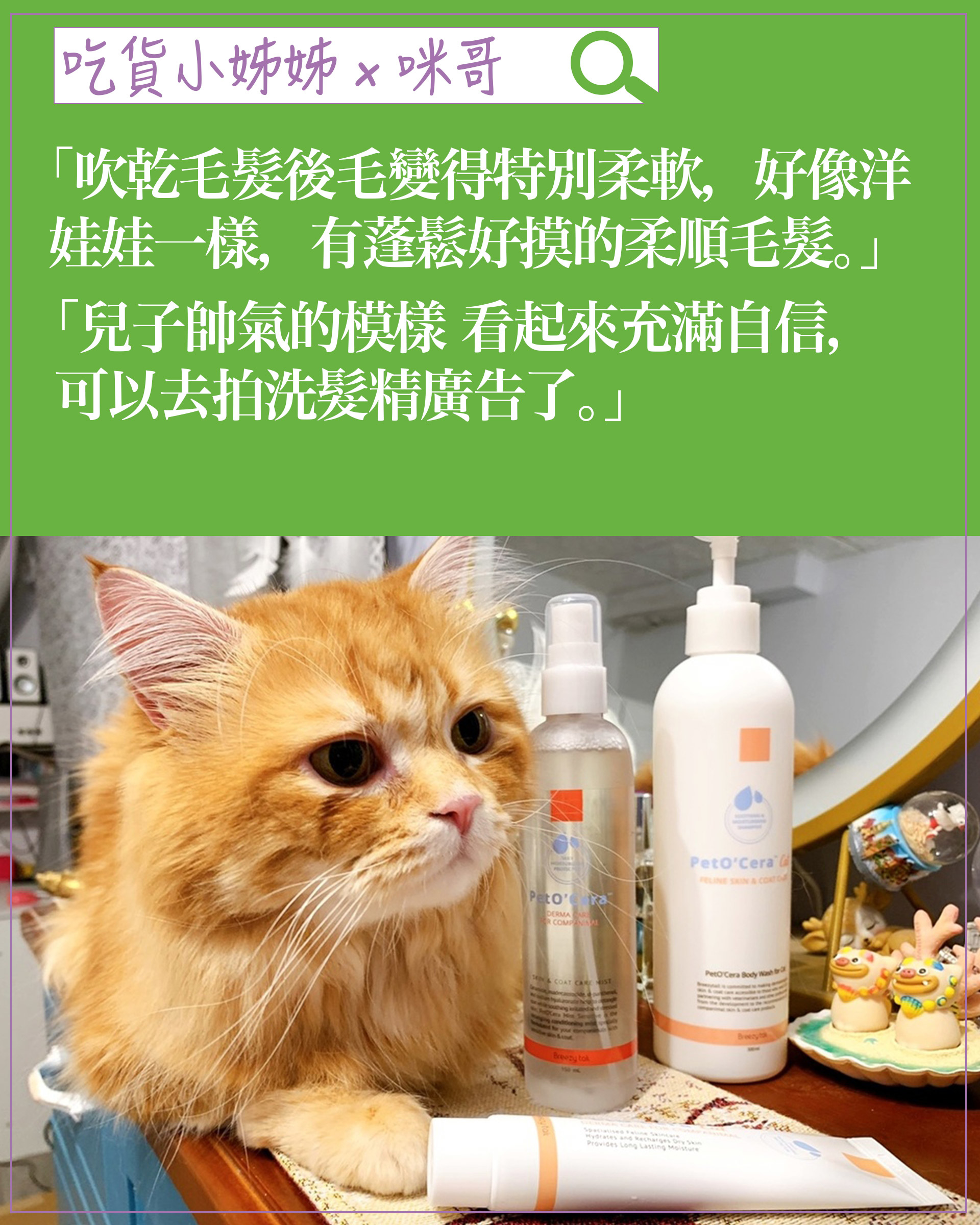 experience-cat01