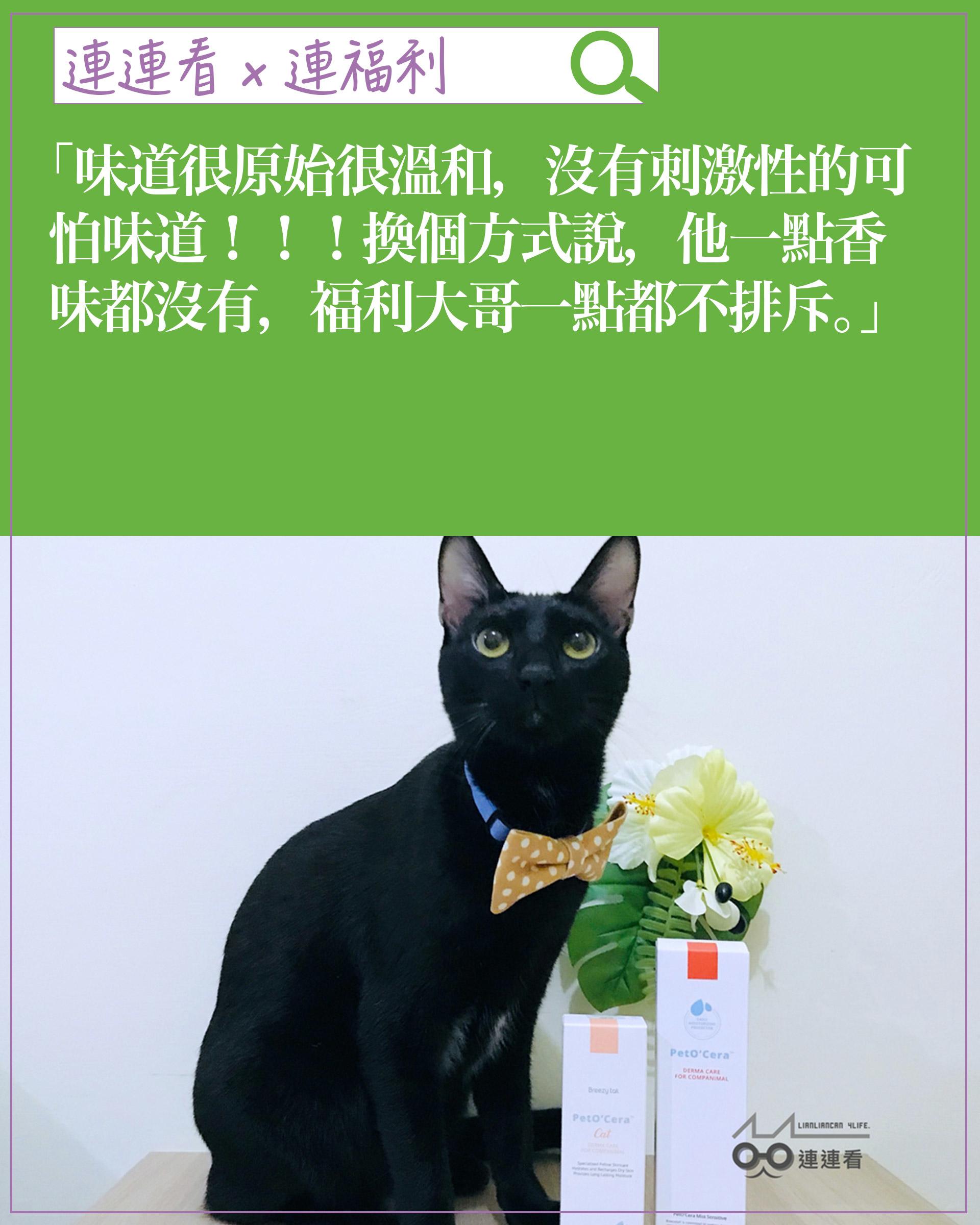 experience-cat03
