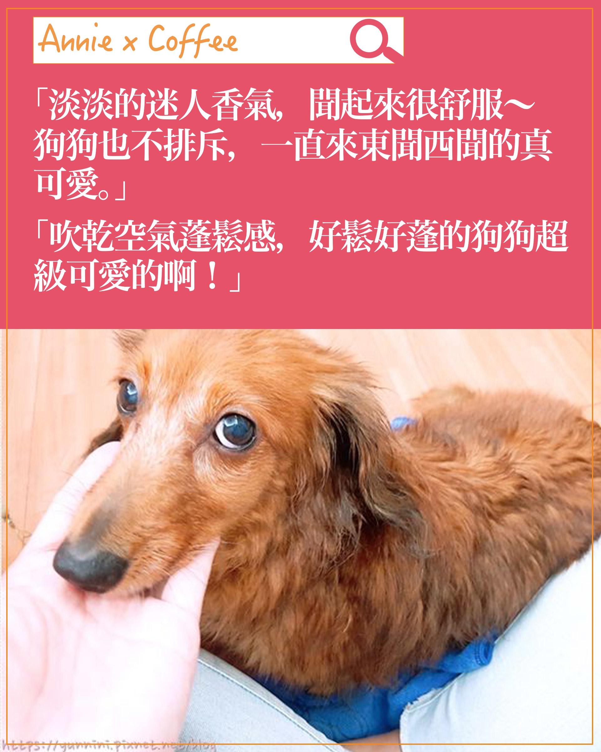 experience-dog05