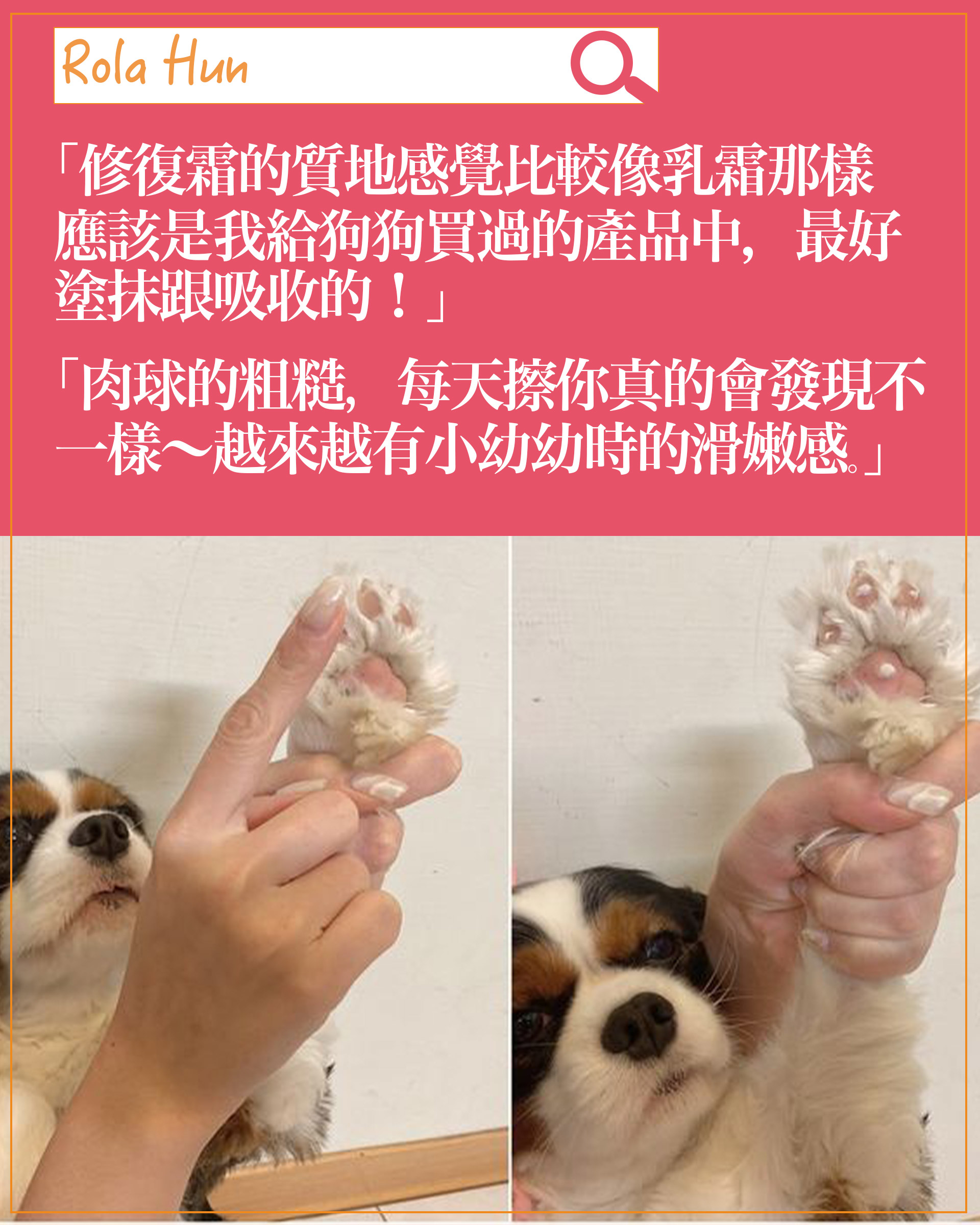 experience-dog06