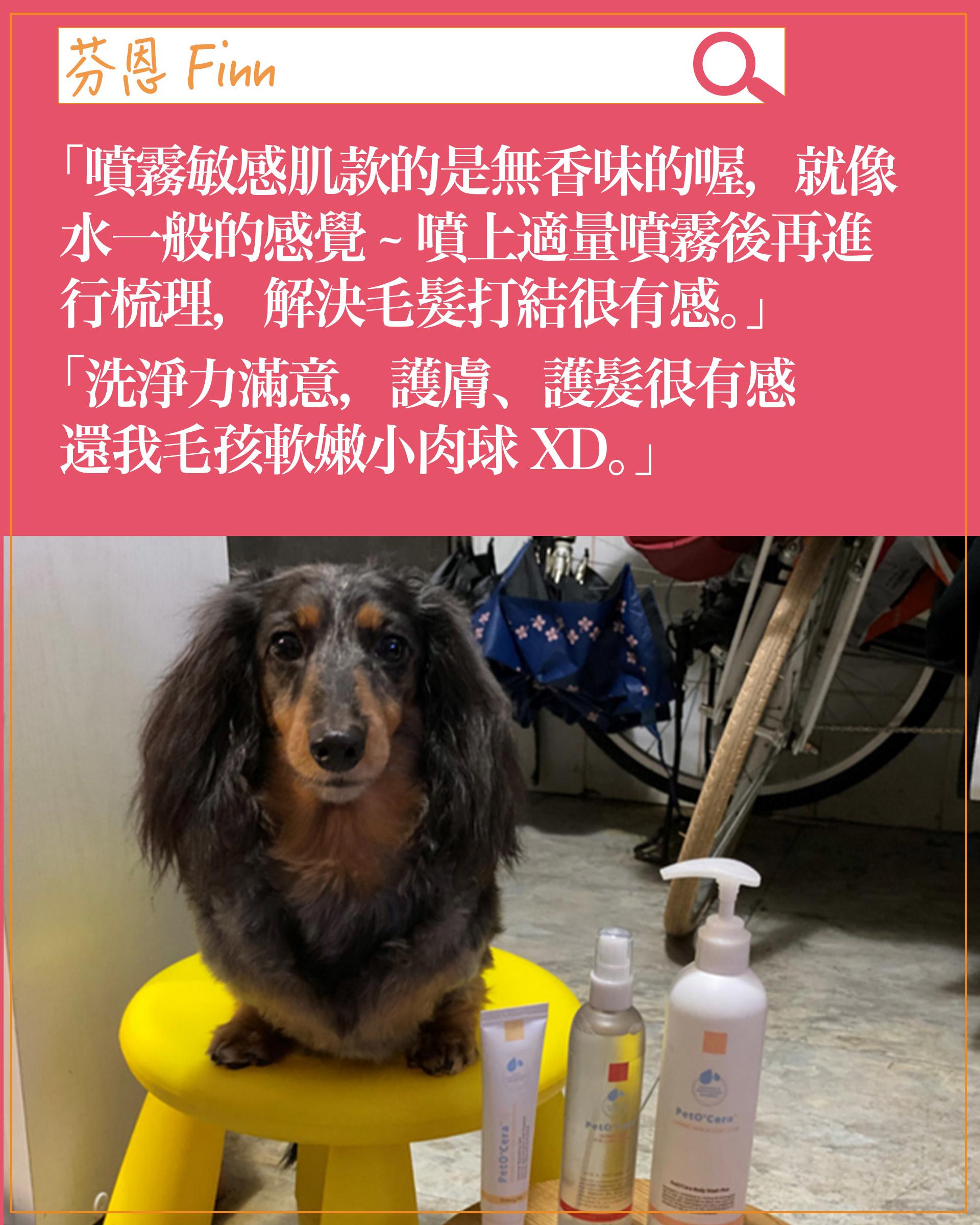 experience-dog07