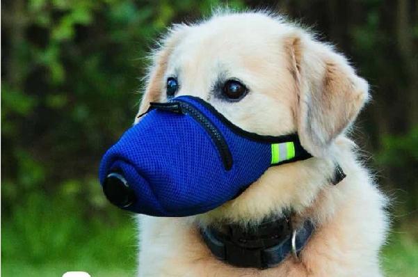 K9 mask, 狗狗專用, 寵物專用, 狗狗口罩, 寵物口罩