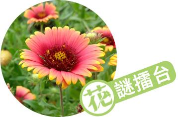 花謎擂台第785回   iGarden花寶愛花園