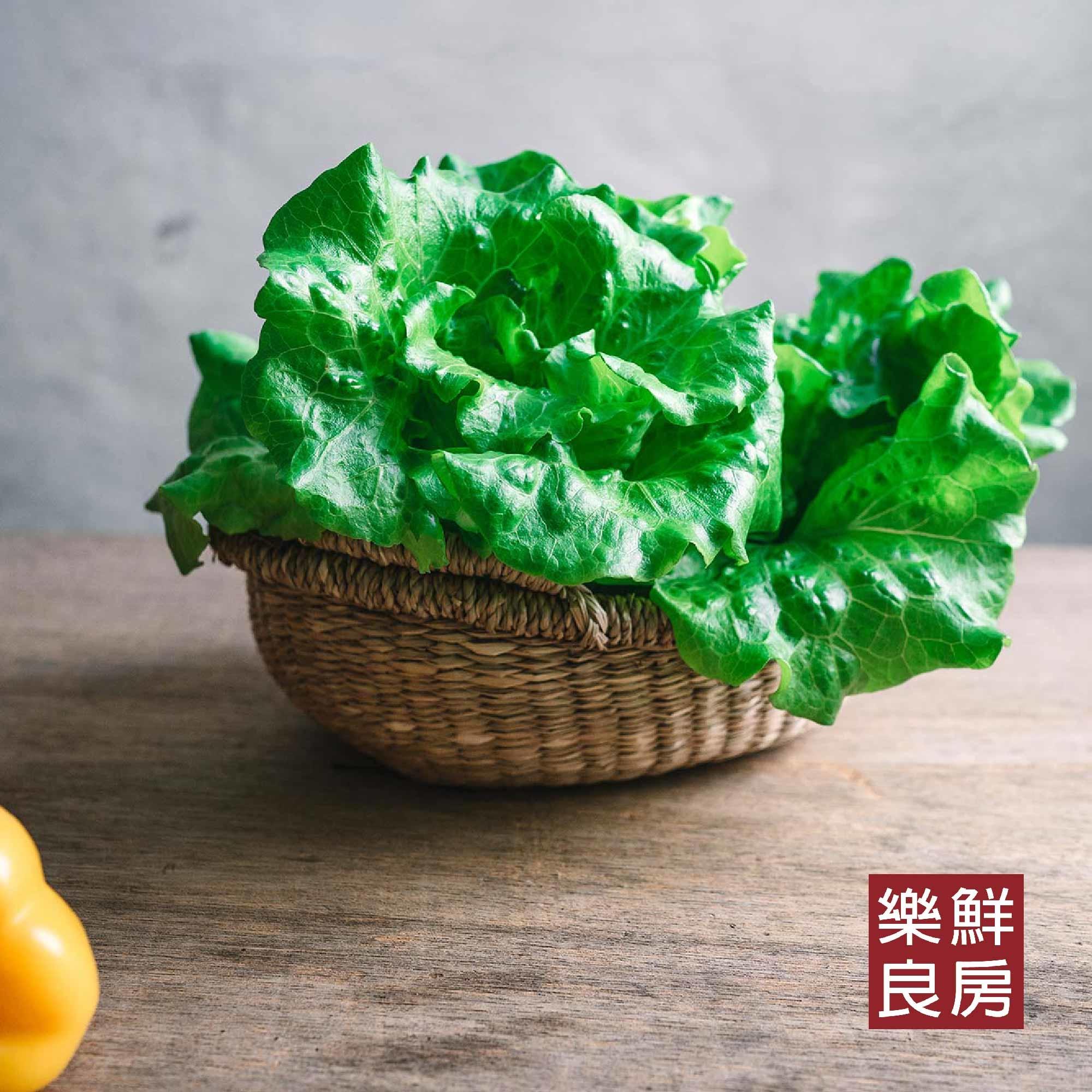 奶油萵苣料理2選!夏日必備奶油萵苣,清爽無負擔的美味