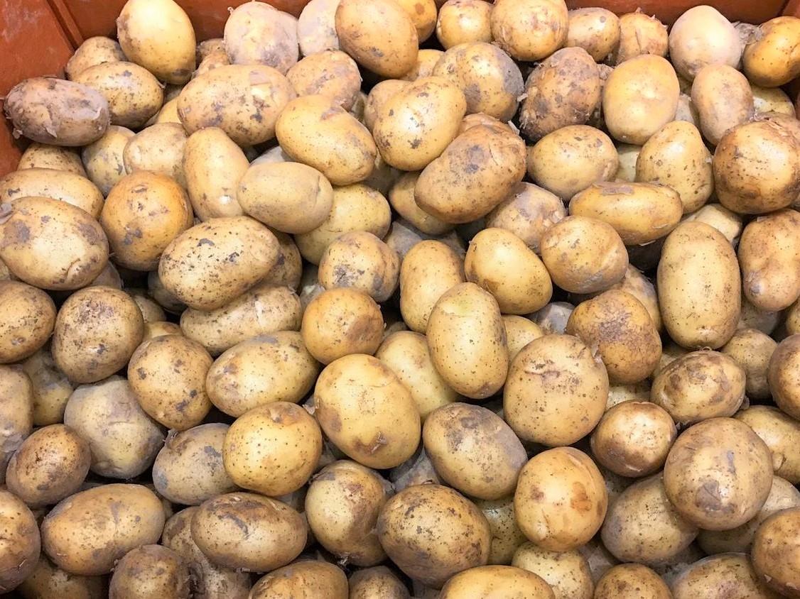 Korean mini potato 韓國薯仔馬鈴薯