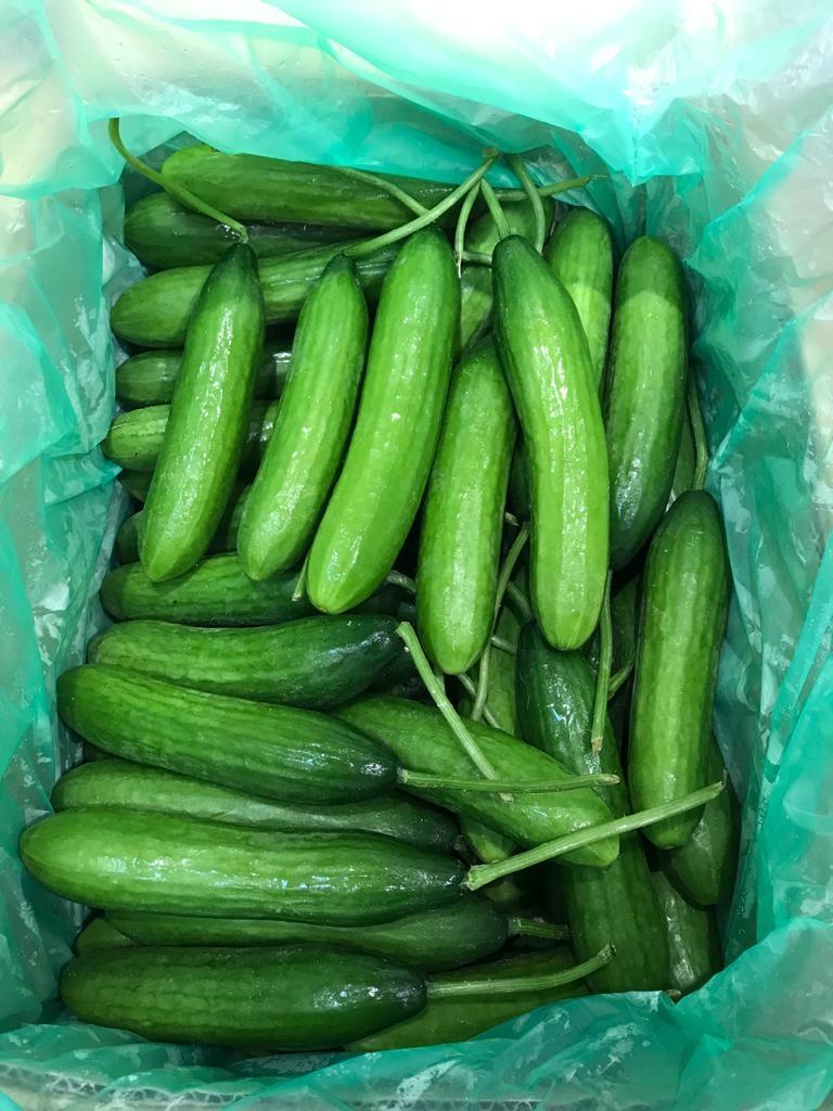 Organic Lebanese Cucumber from Australia 澳洲有機青瓜仔