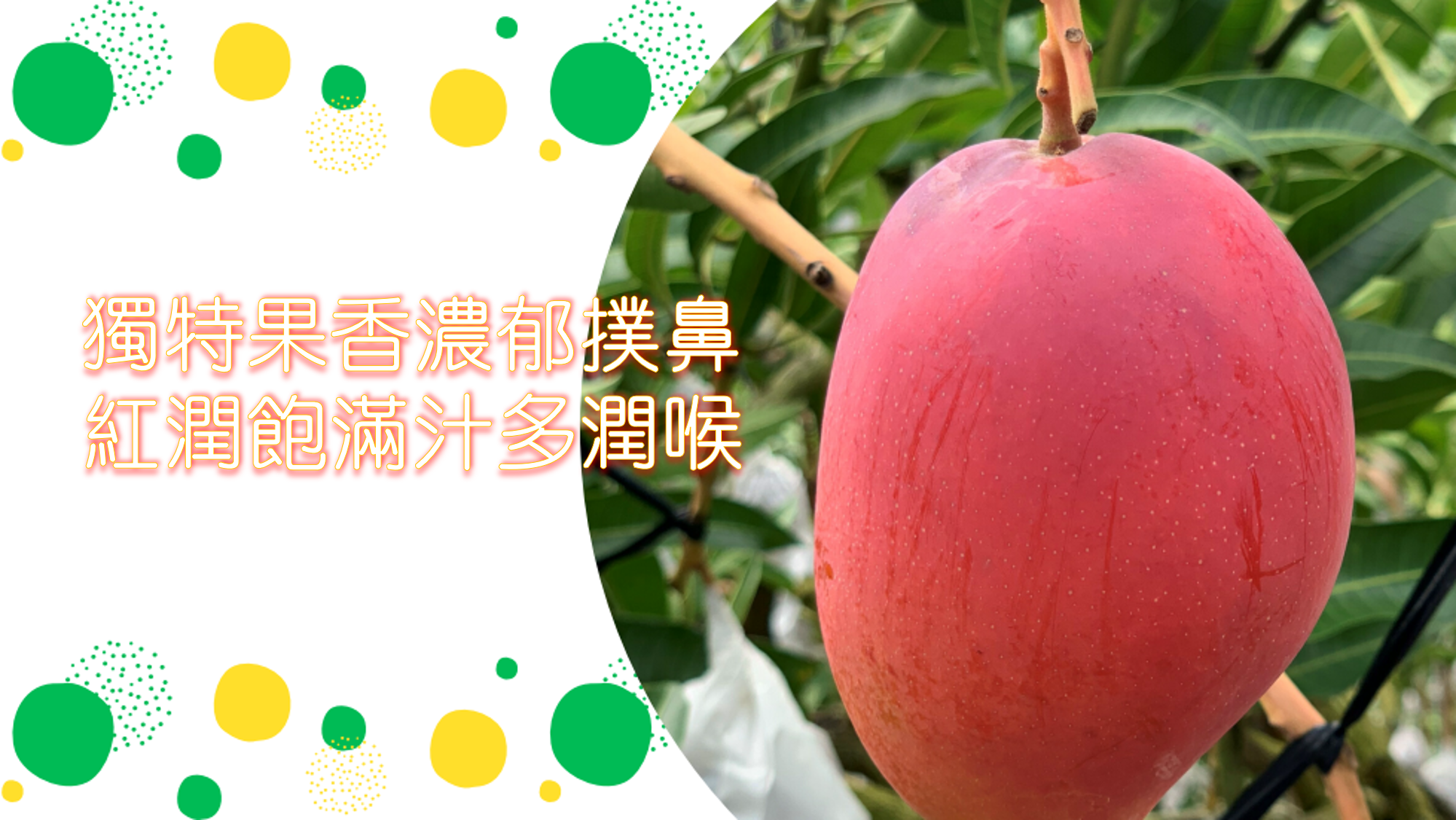 a taiwan apple mango with strong fragrance, juice and sweety
