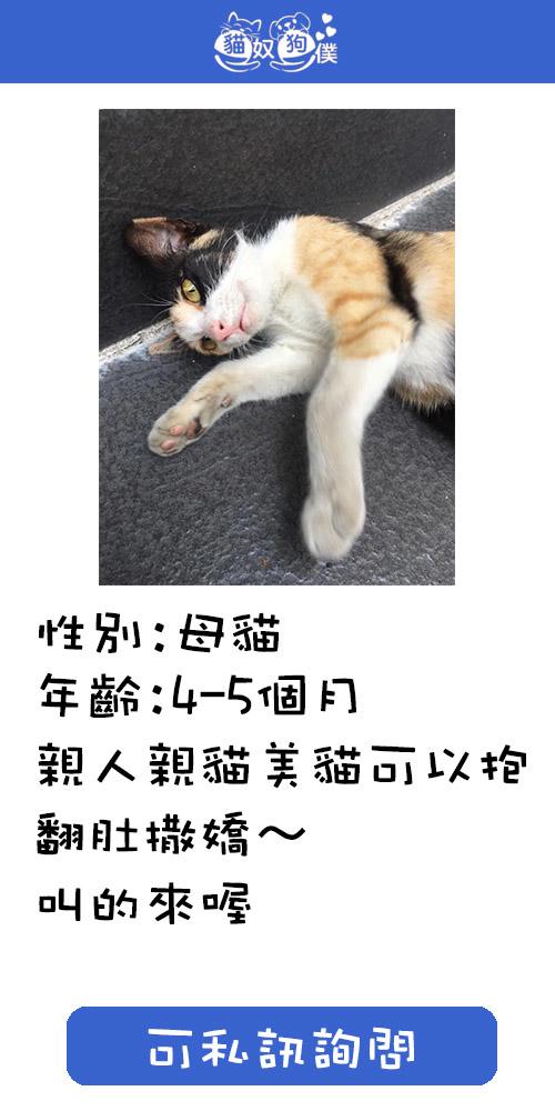 09685755540黃小姐 Line:host0417