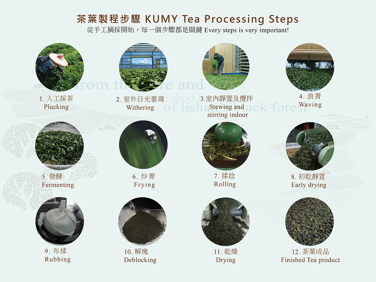 Tea Processing Steps