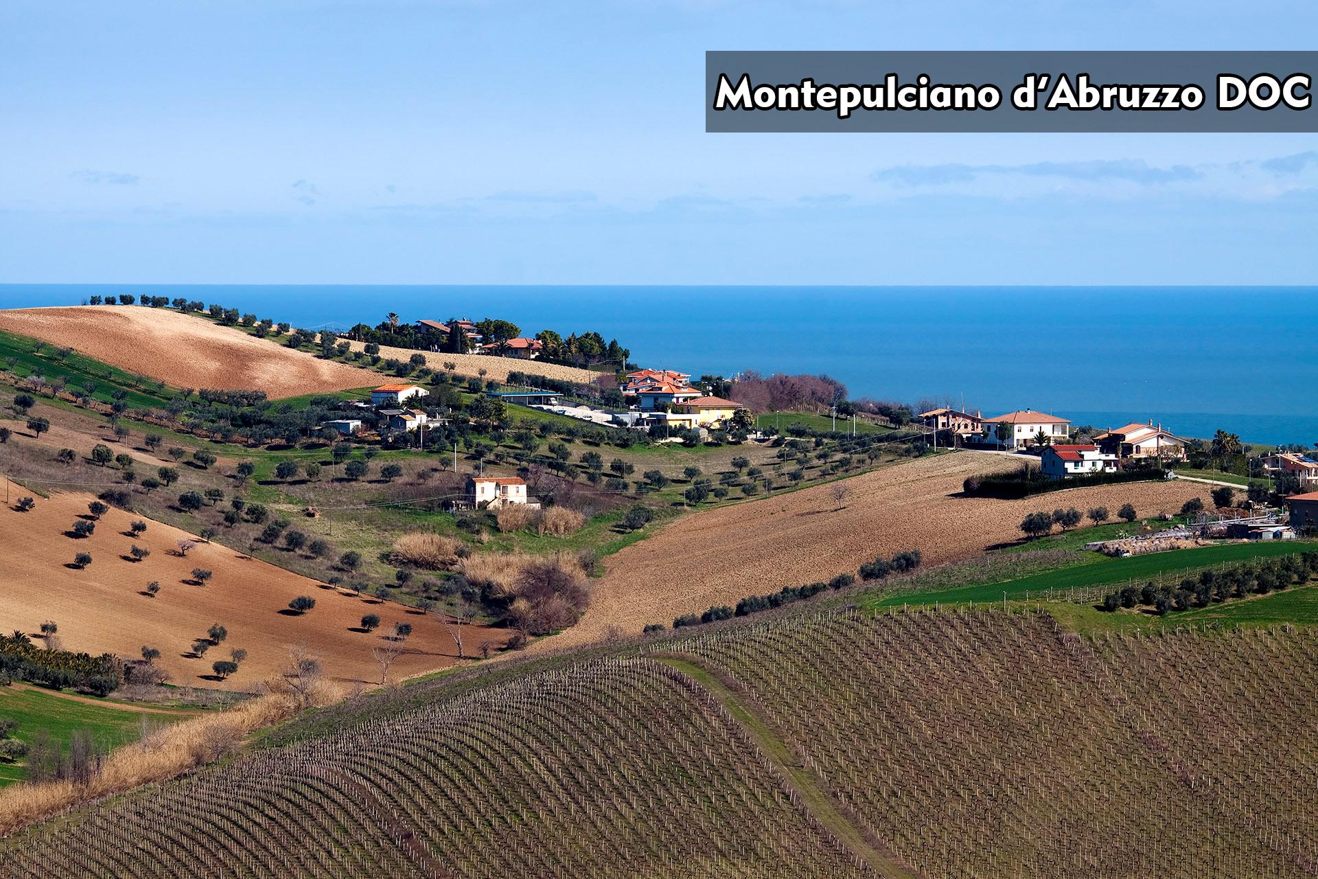 Montepulciano d'Abruzzo DOC|阿布魯佐蒙特普奇亞諾法定產區|阿布魯佐|Abruzzo|Wine Couple 醇酒伴侶