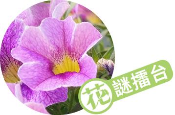 這是什麼花?猜花名抽種子活動 │ 花謎擂台 第791回