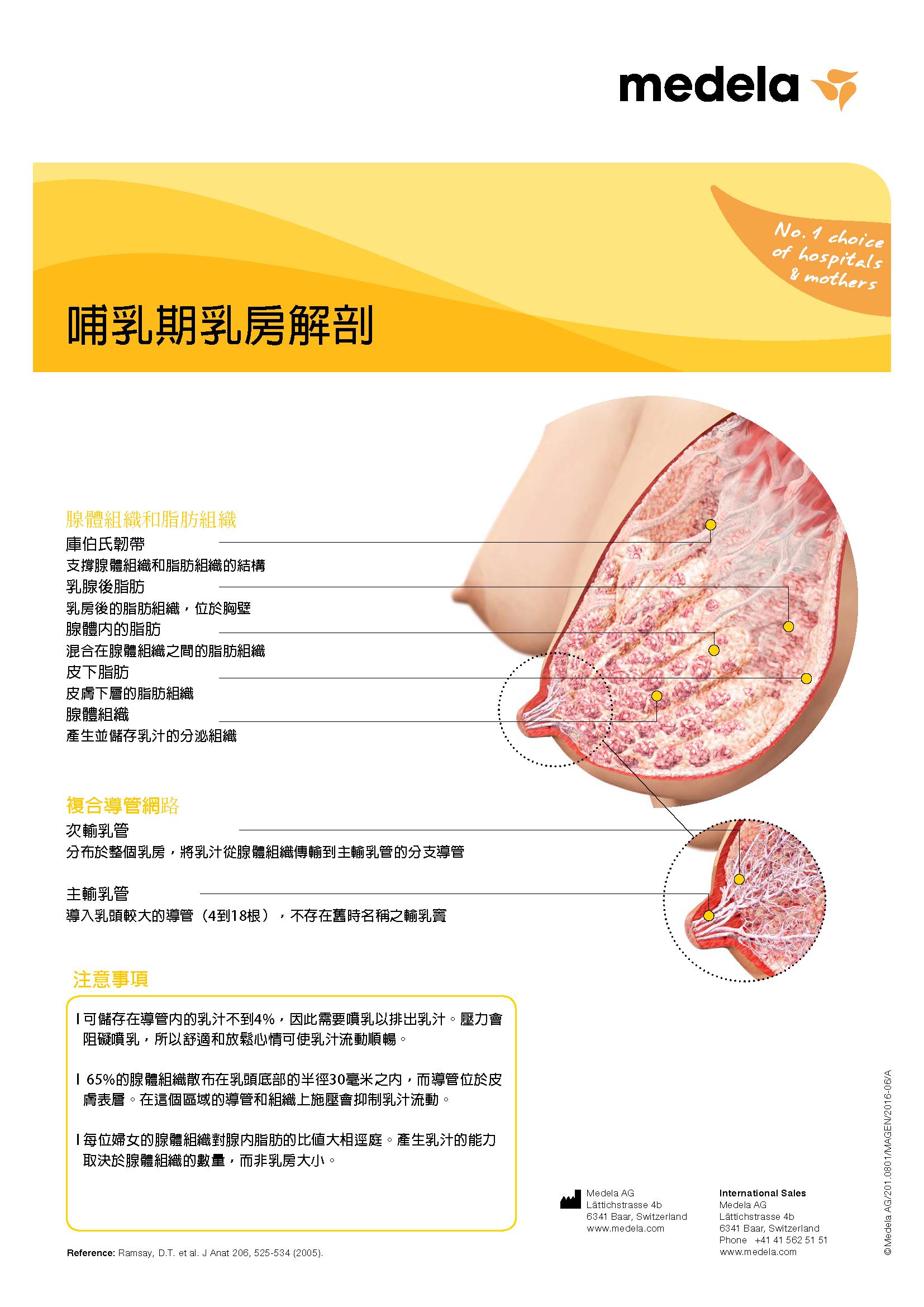 哺乳期乳房解剖學