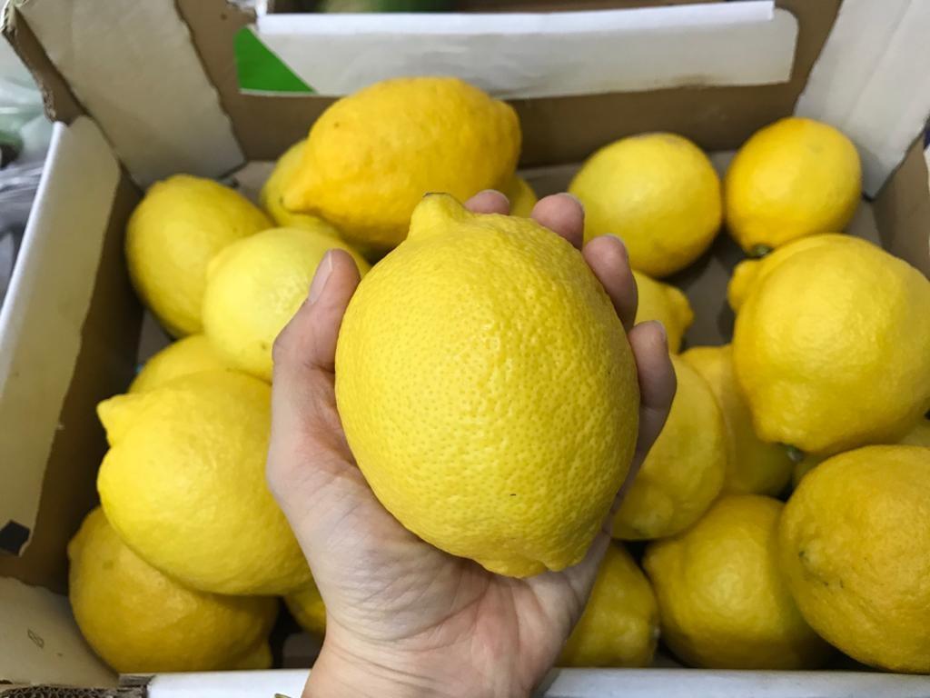 Organic Lemon from Spain