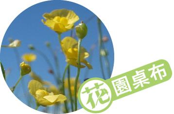 黃色小精靈 絲葉狸藻 │2020年7月桌布