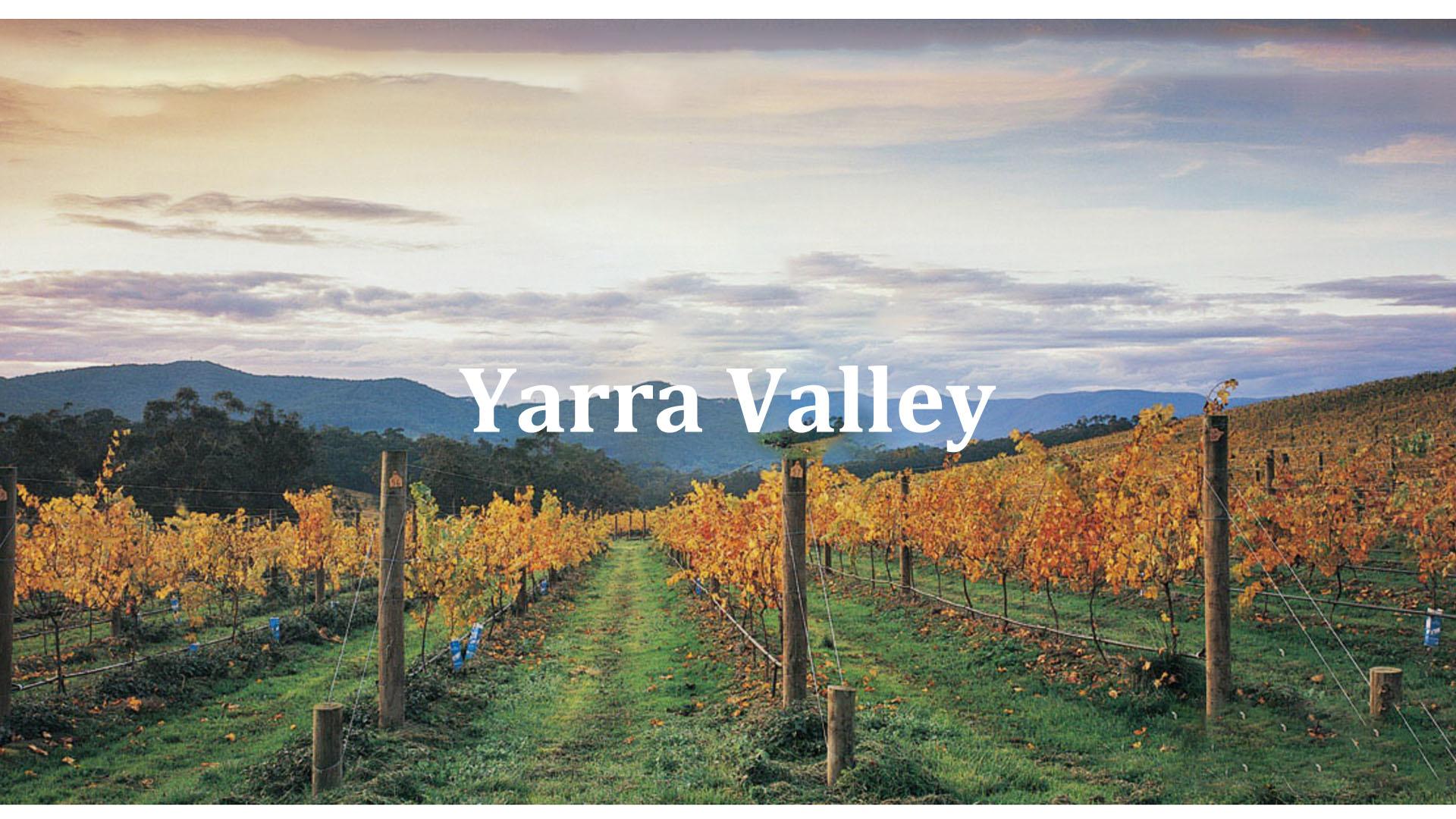yarravalley,victoria,winery,australianwine,redwine,whitewine,hongkong,watsonswine,香港,澳洲紅酒,紅酒批發,澳洲酒批發,rngwine,澳洲白酒
