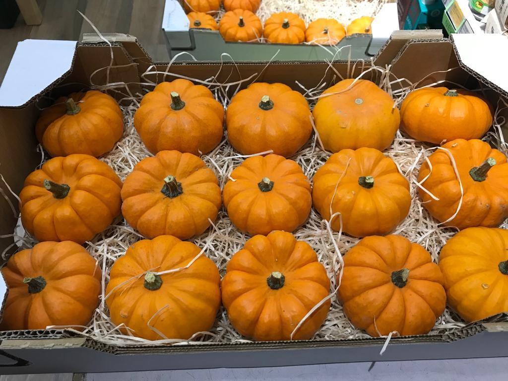 Mini Pumpkin from France 法國迷你南瓜