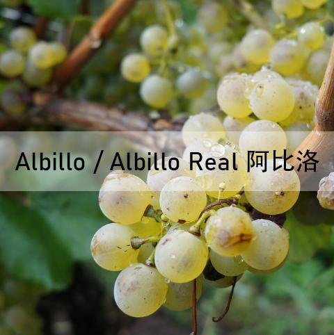Albillo, Albillo Real, 阿比洛